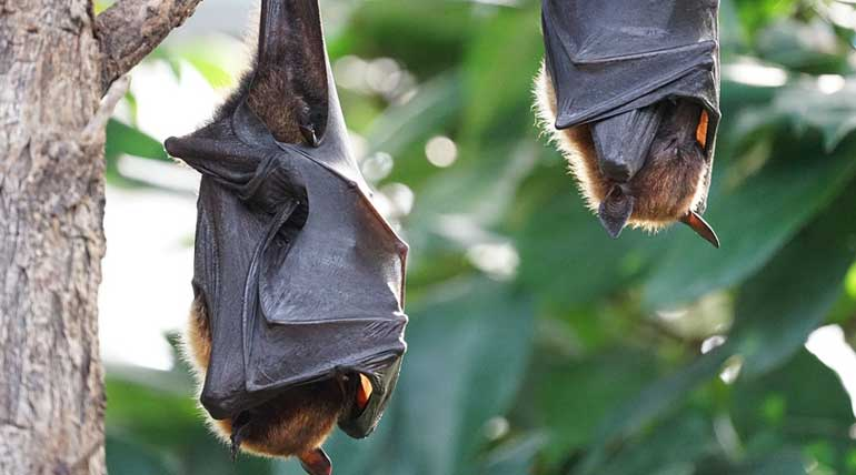 Nipah virus struck back Kerala within a short span